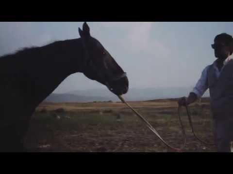 Floris van Bommel Autumn/Winter 2017 campaign from YouTube · Duration:  1 minutes 47 seconds
