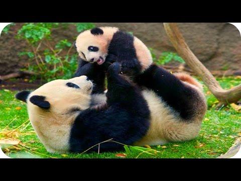 Приколы про животных, смешные животные