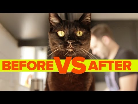Before Vs. After Getting A Cat Incredible Transformations