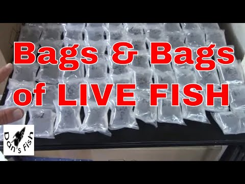 Packing With Pistol! Shipping Live Fish Vlog#4