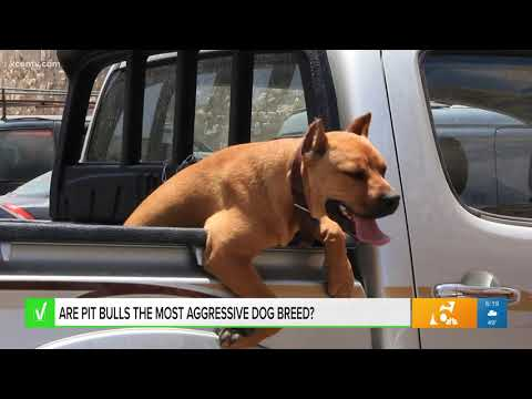 News Around The Lone Star State - KCEN - Are pit bulls the most aggressive dog breed? Our team verifies