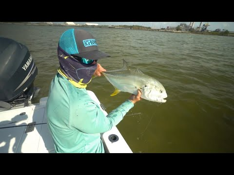 Tampa Bay Apollo Beach Jack Crevalle And Snook Fishing