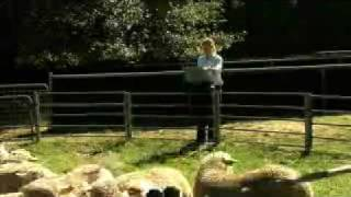 MLA feedbackTV - Ep6 Where the bloody hell are ewes?