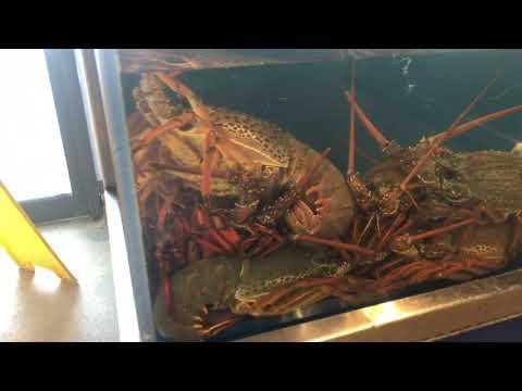 Fish Market In New Zealand?