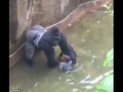 O MGTOW THE CONSTRUCTED GORILLA KILLER NEVER AT FAULT MAMMIE