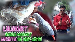 Lalukhet birds Market 16-9-2018 Latest Updates (Jamshed Asmi Informative Channel) In Urdu/Hindi