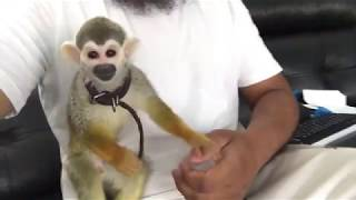 CUTEST Exotic Pets You Can Legally Own in UK #chicothemonkey