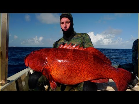 monster hunter world great fish guide