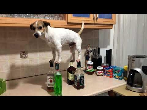 amazing dog trick with bottlles