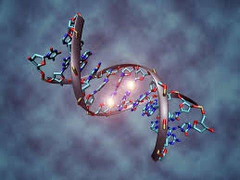Resultado de imagen de adn mejora genetica