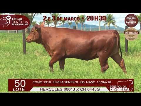 LOTE 50 CONQ 1310