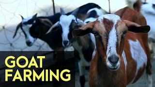Goat Farming - FULL Version | Agribusiness How It Works