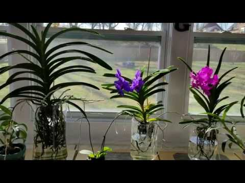 What To Do When Your Orchid Won T Bloom How To Get Better Bloom