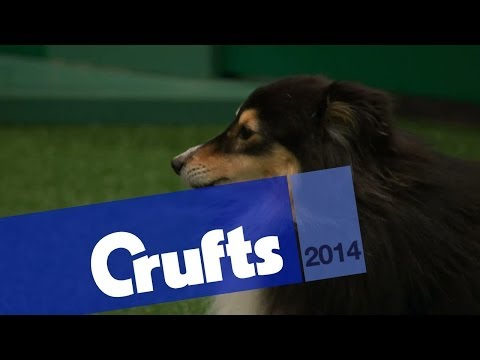 Agility | Crufts Singles Heat | Small, Medium & Large | Jumping | Crufts 2014