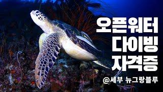 바다거북이랑 투샷! 오픈워터 다이빙 자격증 브이로그 S…