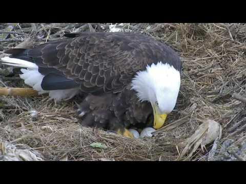 Decorah North Eagles,Shift Change,Slow-Motion PiP&Egg Roll 3/6/17