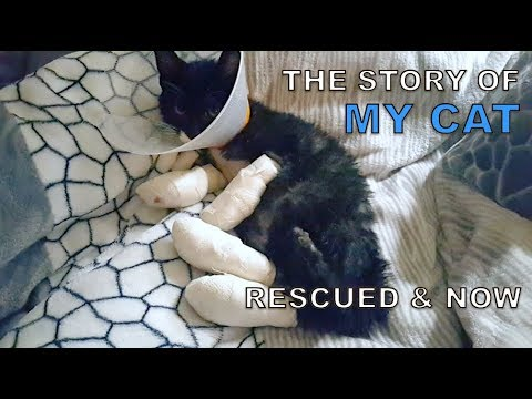 The Story of My Cats (Rescued & Now)