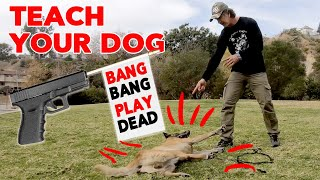 Teach Your Dog to Play Dead  Trick Dog Training