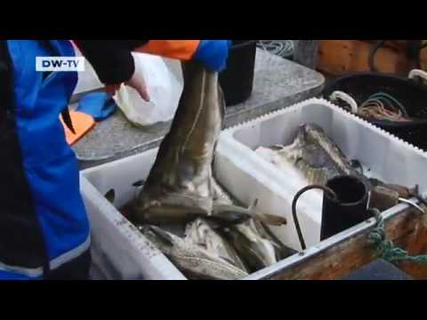 Norway: Climate Change Drives off Norwegian Cod | European Journal