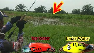 Lure Casting Snakehead: Sofrog Under Water Vs Top Water
