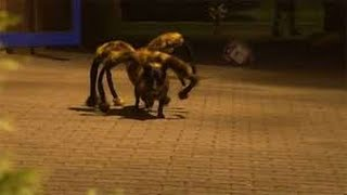 The Spider Dog Prank, Really Funny