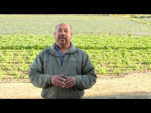 JSM Difference Between Organic & Conventional Farming