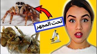 شوفوا كيف شكل العنكبوت تحت الميكروسكوب | يخوف !