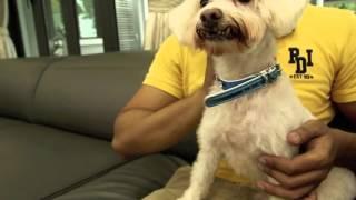 PET101 - Toilet Training Your Dog