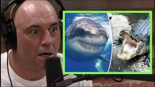 Joe Rogan Freaks Out About Alligators & Sharks