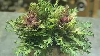 DIY Faux Kale Foliage Design