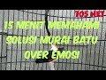 Menit Memahami Solusi Murai Batu Over Emosi  Mp3 - Mp4 Download