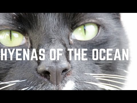 Lizard Parents - HYENAS OF THE OCEAN: An Improvised Song