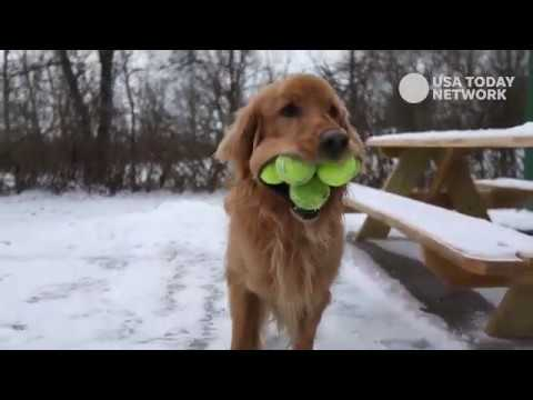 Ball Hog Canandaigua Dog Can Hold 6 Tennis Balls At Once Youtube