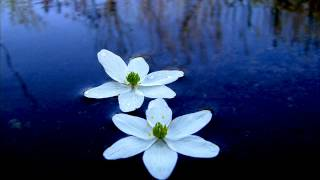 видео Медитативная практика «Исцеление розами»