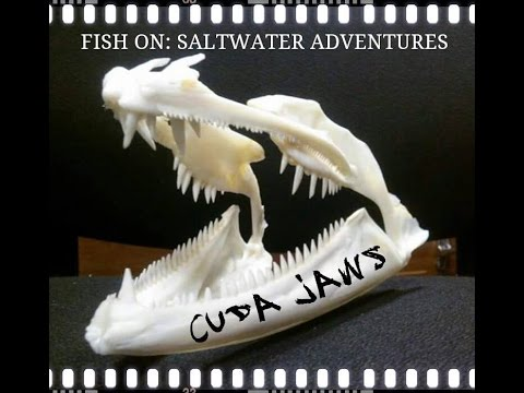 How To Make A Barracuda Souvenir Trophy