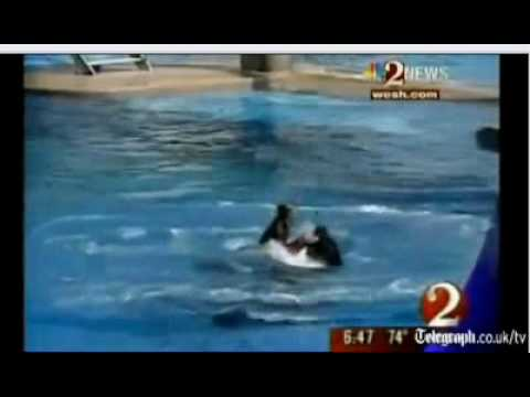 Killer Whale Kills Trainer At Sea World WATCH NOW