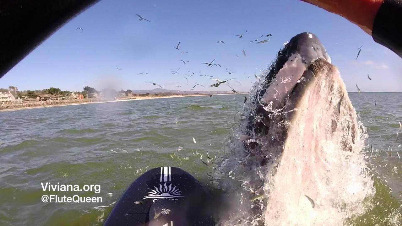 Una ballena casi se traga a esta mujer