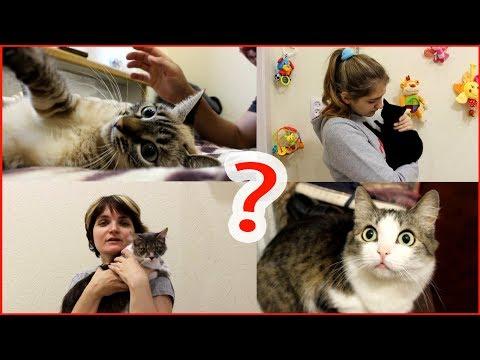 Откуда у нас столько кошек?