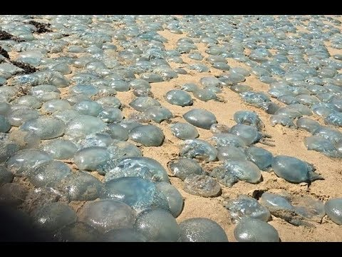 Кладбище медуз в