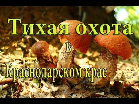 Тихая охота в Апшеронском районе. Грибы в Краснодарском крае