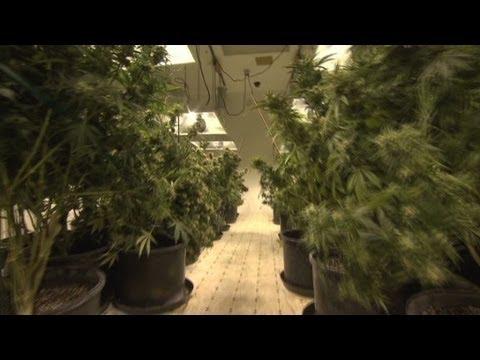 Colorado marijuana delivery: 45 minutes or less