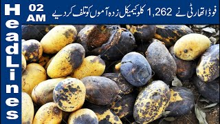 PFA Wastes Thousands of Chemical Coated Mangoes|02 PM Headlines – 26 June 2019 |Lahore News