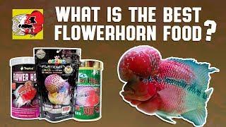 What is the Best Flowerhorn Food?