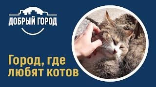 Добрый город - Город, где любят котов