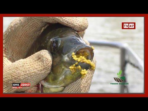 Aquaculture In Kenya:  Modern Fish Farming Techniques
