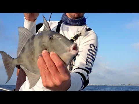 Triggerfish Grocery Meat Fishing Challenge - ft. 1Rod1ReelFishing