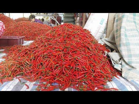 Máy sấy ớt, lò sấy ớt, sấy ớt, Máy sấy nông sản - nhiệt độ thấp - Truyền hình Nghệ An
