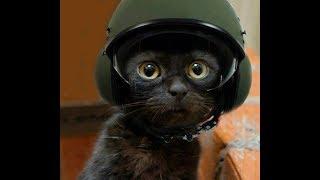El gato más hermoso montando en moto