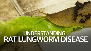 Understanding Rat Lungworm Disease