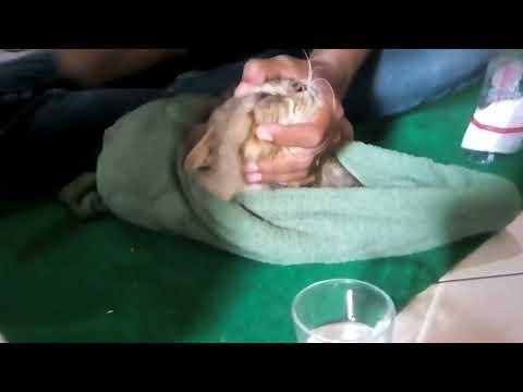 Bagaimana Cara Menyembuhkan Sakit Mata Pada Kucing   08 ...
